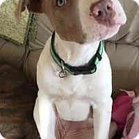 Adopt A Pet :: *SAGE* - Kingston, WA