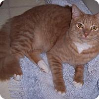 Adopt A Pet :: Sky - Richmond, VA