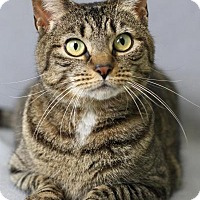 Adopt A Pet :: Marley (Cherry Hill Petsmart) - Blackwood, NJ