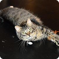Adopt A Pet :: Ozzie - Richmond, VA