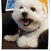 Adopt A Pet :: Pending!! Jack - OK - Tulsa, OK