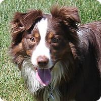 Adopt A Pet :: Maverick - Lebanon, CT