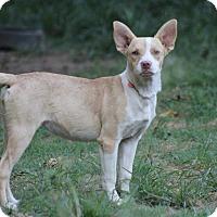 Adopt A Pet :: Zoe' - Naugatuck, CT