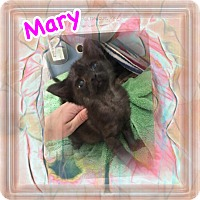 Adopt A Pet :: Mary - Brentwood, NY