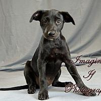 Adopt A Pet :: Cruella - Crescent, OK