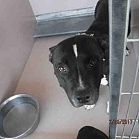 Adopt A Pet :: LUCKY - Oroville, CA