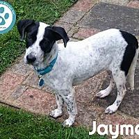 Adopt A Pet :: Jaymes - Kimberton, PA