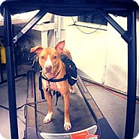 Adopt A Pet :: HUCK - Grafton, OH