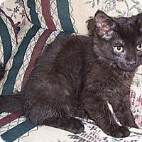 Adopt A Pet :: Salem - Gray, TN