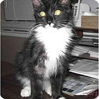 Adopt A Pet :: Sebastian - Modesto, CA