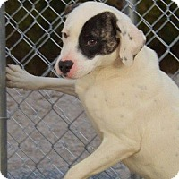 Adopt A Pet :: Patches - Clinton, ME