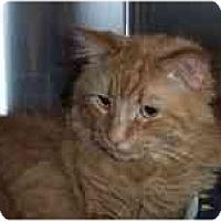 Adopt A Pet :: Red - Arlington, VA