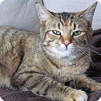 Adopt A Pet :: Tilly - Douglas, ON