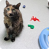 Adopt A Pet :: Slim - Newport Beach, CA