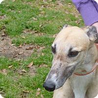 Adopt A Pet :: Timmy - Lexington, SC