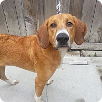 Adopt A Pet :: Molly*ADOPTED!* - Chicago, IL