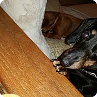 Adopt A Pet :: TyTy - Pinellas Park, FL