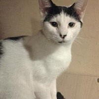 Adopt A Pet :: Zippity fka Prim - Philadelphia, PA