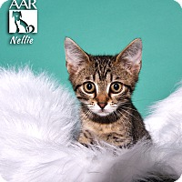 Adopt A Pet :: Nellie - Tomball, TX