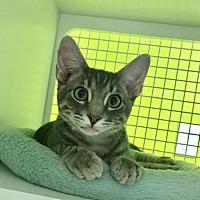 Adopt A Pet :: Oxford - San Antonio, TX