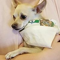 Adopt A Pet :: Carlos - Goodyear, AZ
