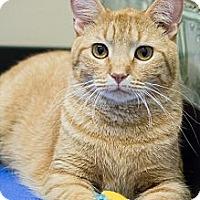 Adopt A Pet :: Blake - Chicago, IL