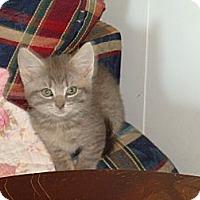 Adopt A Pet :: Wesley - Spotsylvania, VA