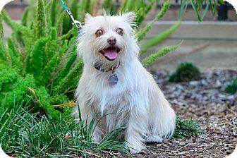Terrier (Unknown Type, Medium) Mix Dog for adoption in Santa Monica, California - Pearl