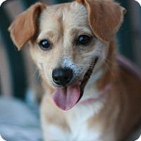 Adopt A Pet :: Butchy - Canoga Park, CA