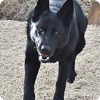Adopt A Pet :: Boca - Meridian, ID