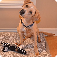 Adopt A Pet :: Riley - Marietta, GA