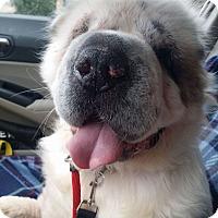 Adopt A Pet :: Ollie in TX - pending - Apple Valley, CA