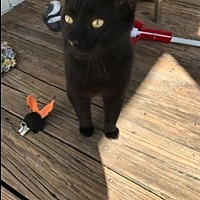 Adopt A Pet :: Salem - Crestview, FL