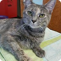 Adopt A Pet :: Raine - Colmar, PA