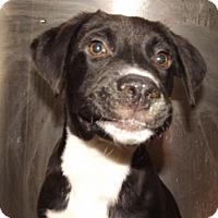 Adopt A Pet :: Grady - Oxford, MS