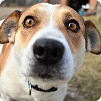 Adopt A Pet :: Jango - Fayette, MO