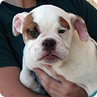 Adopt A Pet :: Peter - Palmdale, CA