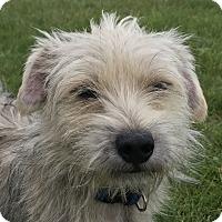 Adopt A Pet :: Boomer - Tumwater, WA