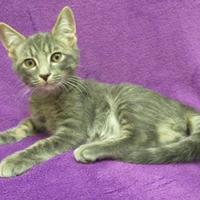 Adopt A Pet :: Barney - Port Charlotte, FL