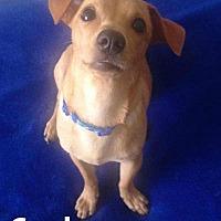 Adopt A Pet :: Gordon - Calgary, AB