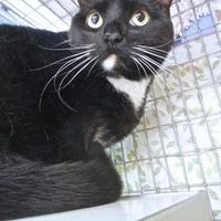 Adopt A Pet :: Chloe - Kansas City, MO