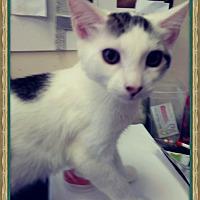 Adopt A Pet :: Almay - Trevose, PA