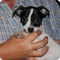 Adopt A Pet :: Bravo - New Milford, CT