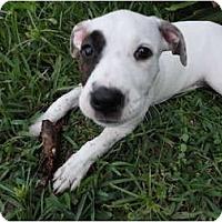 Adopt A Pet :: Daisy Mae - Orlando, FL