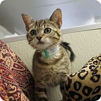 Adopt A Pet :: Poppette #2 - Lunenburg, MA