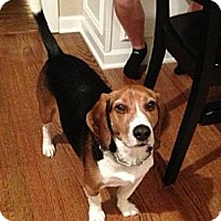 Adopt A Pet :: Ernie - Schererville, IN