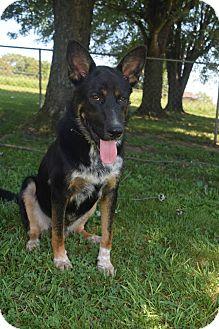 German Shepherd Dog Mix Dog for adoption in Greeneville, Tennessee - Rommel