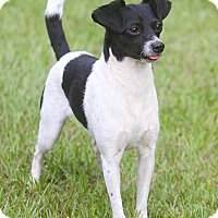 Adopt A Pet :: Pepper - Conyers, GA