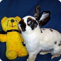 Adopt A Pet :: Flora - Alexandria, VA