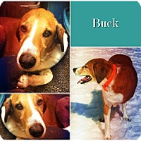 Adopt A Pet :: Buck - Ontario, ON